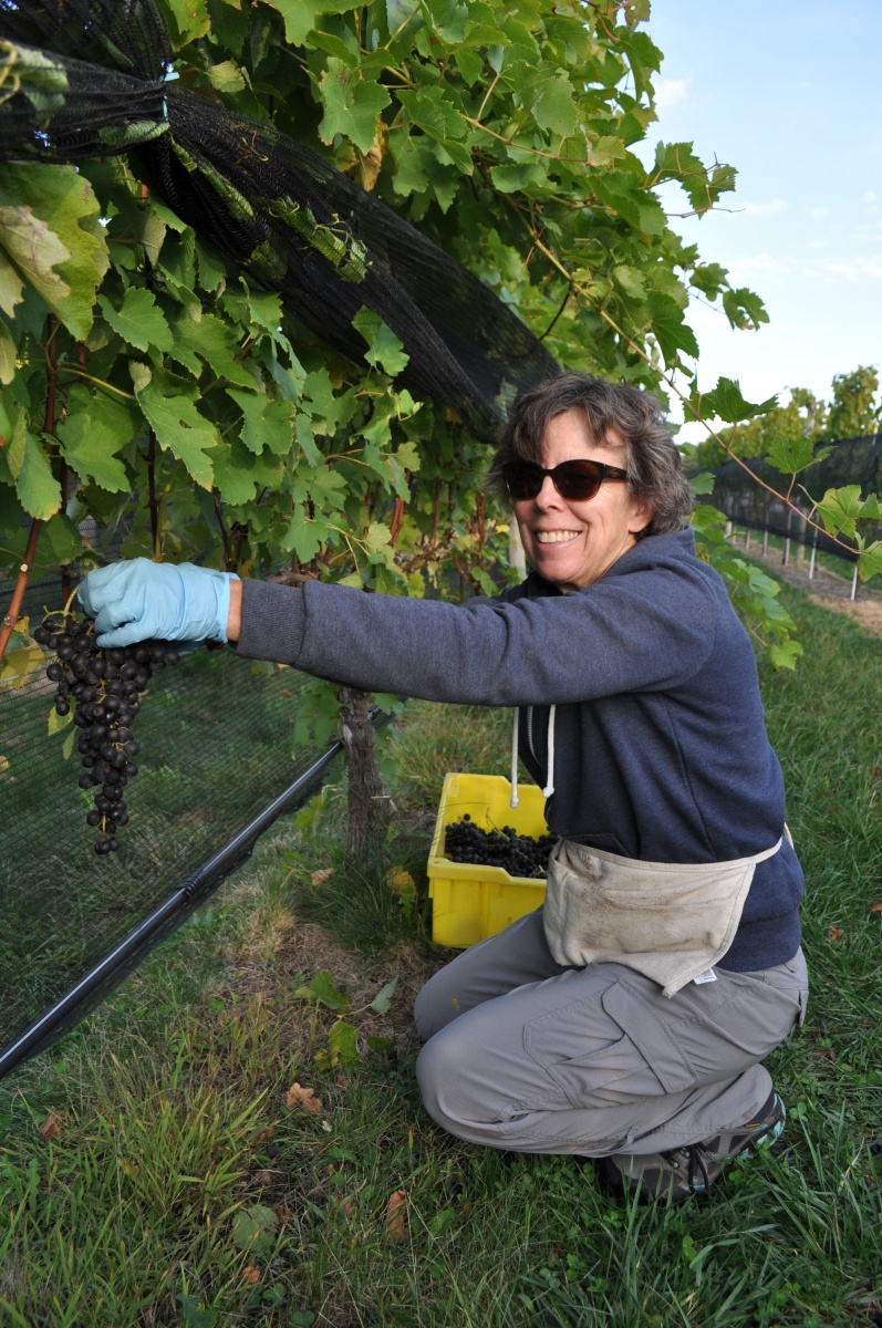 Alice Wise cutting last cluster of grapes