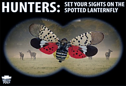 "As if looking through binoculars, sighting deer and an adult spotted lanternfly. ""Hunters, set your sights on spotted lanternfly."""