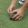 Risk Reduction for Turfgrass image