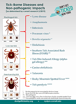 Poster showing tick-borne diseases and non-pathogenic impacts