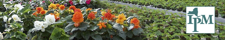 Greenhouse IPM: beautiful flowers growing in a greenhouse