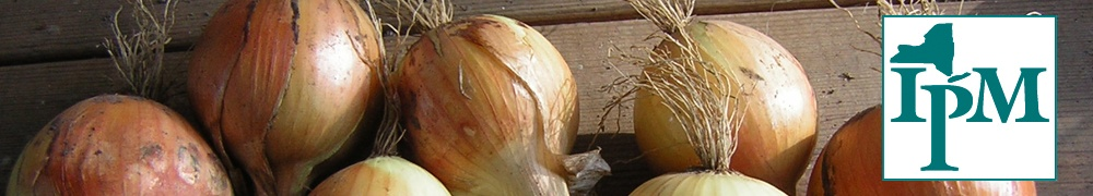 onions, a host plant of leek moth