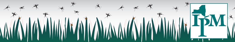 mosquitoes and ticks in the grass