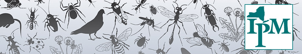 A banner with silhouettes of pests, such as insects, weeds, pigeons and rats.