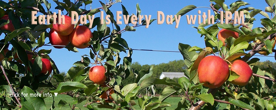 Earth Day with IPM: an apple tree