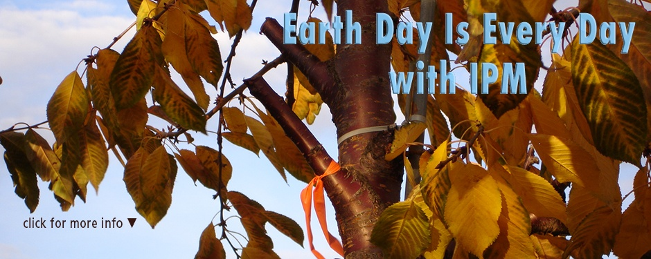 Earth Day with IPM: a cherry tree with 6 inch stub cuts