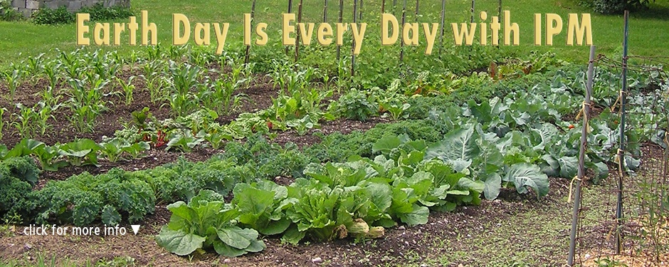 Earth Day with IPM: an organic vegetable garden