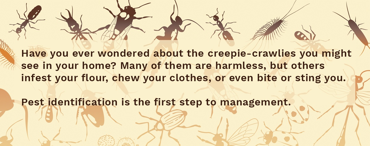 Pest identification is the first step to management.