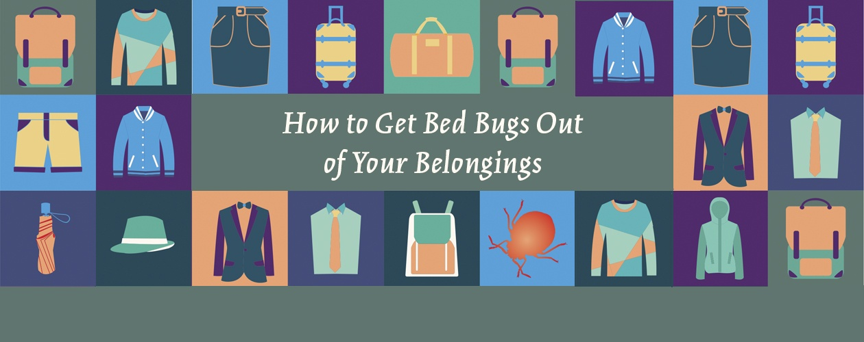 How to Get Bed Bugs Out of Your Belongings