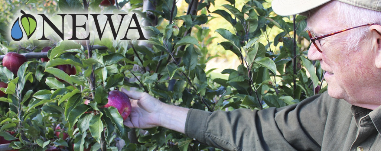The NEWA logo on top of a photo of an apple grower pulling an apple off a tree.