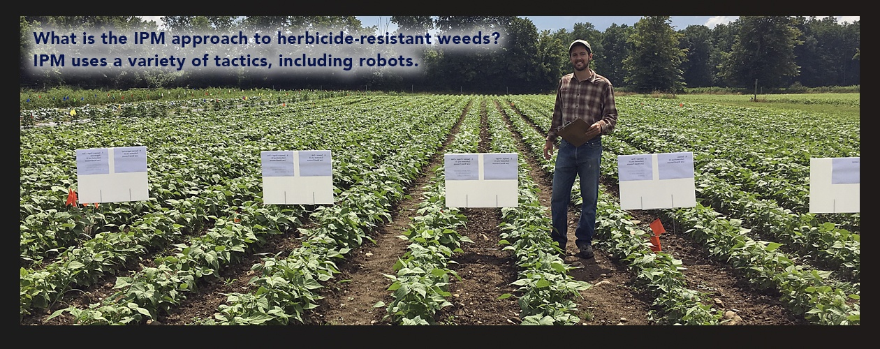 Bryan Brown, NYSIPM, in a test field of soybeans