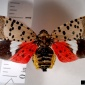 Spotted Lanternfly. Photo: Pennsylvania Department of Agriculture , Bugwood.org