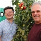 Zhangjun Fei, left, and James Giovannoni are pictured in a greenhouse at the Boyce Thompson Institute.